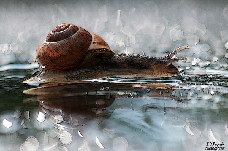 dsc-4563-snail.jpg